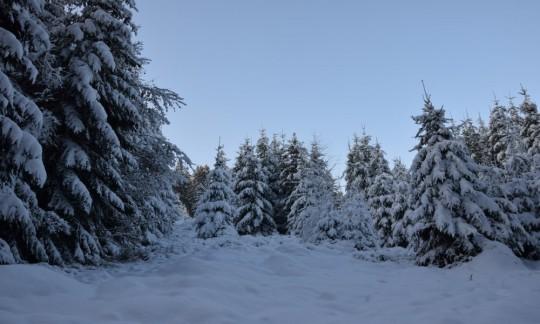 Wald im Winter 2014-2015